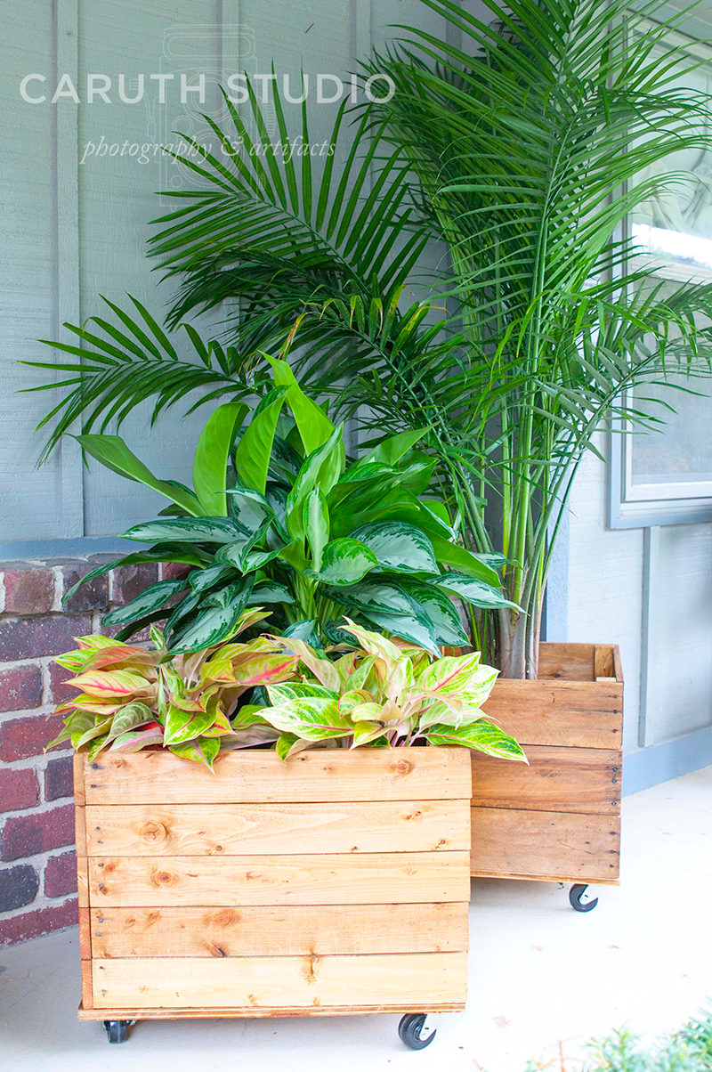 potted Pallet planter