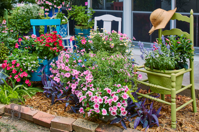 Annuals and chairs